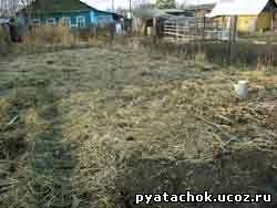 Делянка устеленная соломой для посадки картофеля