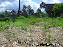 Делянка устеленная соломой и проросшими сорняками, готовая к посадке картофеля