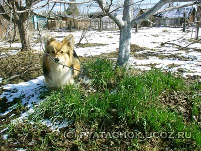 Ранний зеленый лук в начале мая.